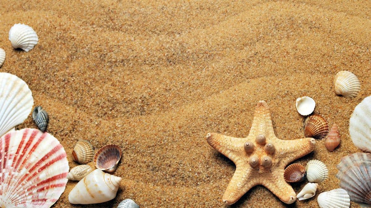 Verano, arena de playa y conchas